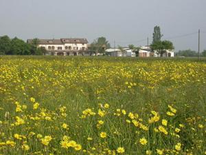 Immagine di azienda agricola