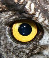 occhio di gufo