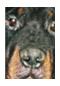 """Immagine opuscolo """"Leishmaniosi del cane"""""""